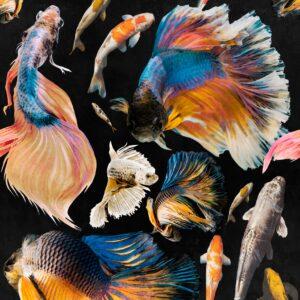 Behang Goldfish uit de ATOLL-collectie van Mind The Gap