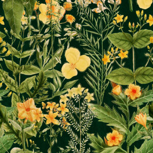 Behang Mimulus uit de Florilegium-collectie van Mind The Gap